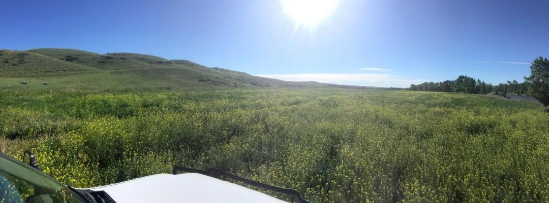 Matney Field